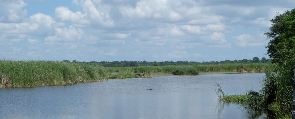 Image of marsh